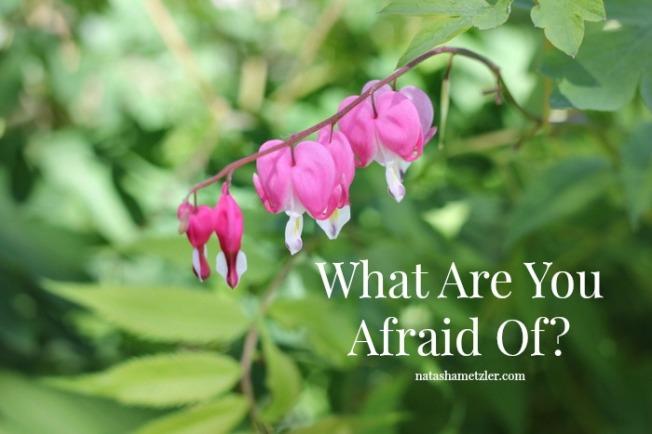 what are you afraid of? @natashametzler