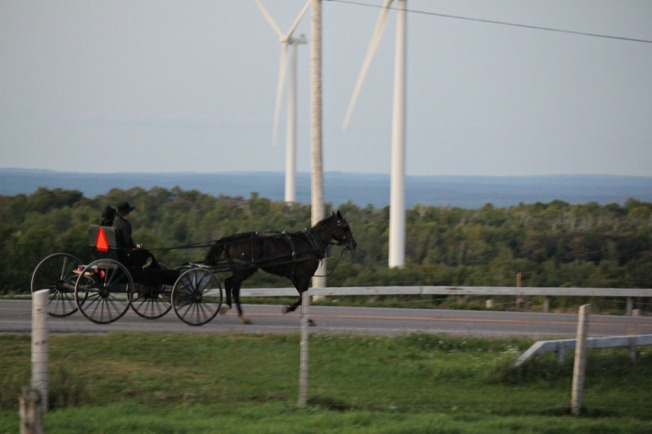Amish out courting