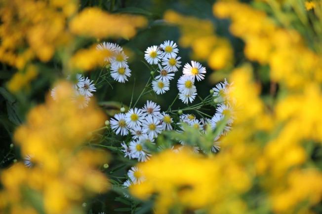 golden flower rings