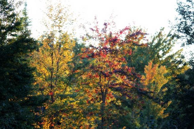 sun through treetops